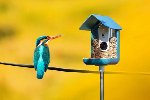 bird-buddy