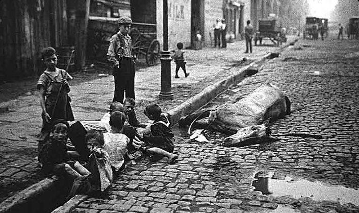 smrtnost-konja-ulica-deca